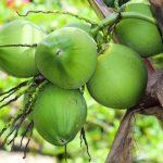 9 tác dụng tuyệt vời của nước dừa cho sức khỏe con người